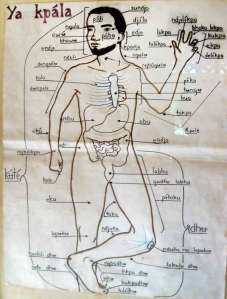 Body parts in Mayogo language of Congo